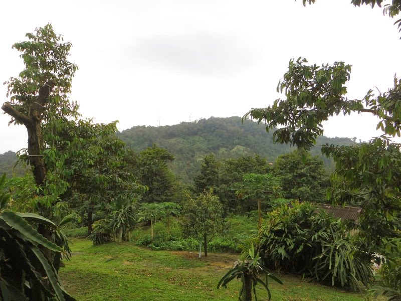Сад на Самуи