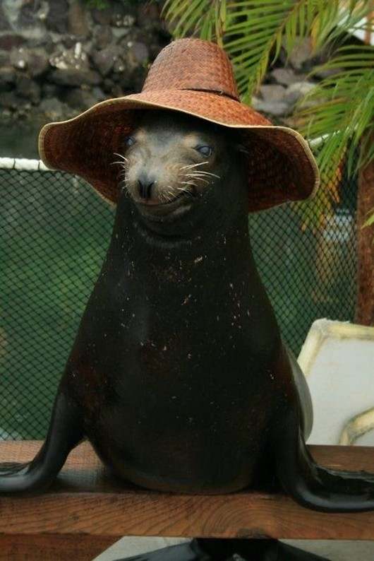 Animal Pictures 22 Adorable Animals Wearing Hats