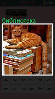в библиотеке лежит кошка на книгах и хвост вниз висит