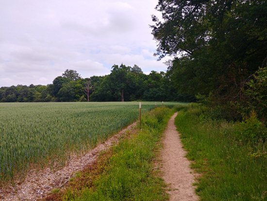 Photograph of The path leading up to Potwells Valley with Redwell Wood on the right Image by Hertfordshire Walker released under Creative Commons BY-NC-SA 4.0