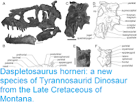 https://sciencythoughts.blogspot.com/2017/03/daspletosaurus-horneri-new-species-of.html
