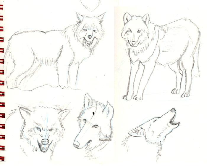 IM Challenge #3 [Aramis] : Les loups garoux de Thiercelieux   Recherche_loup01