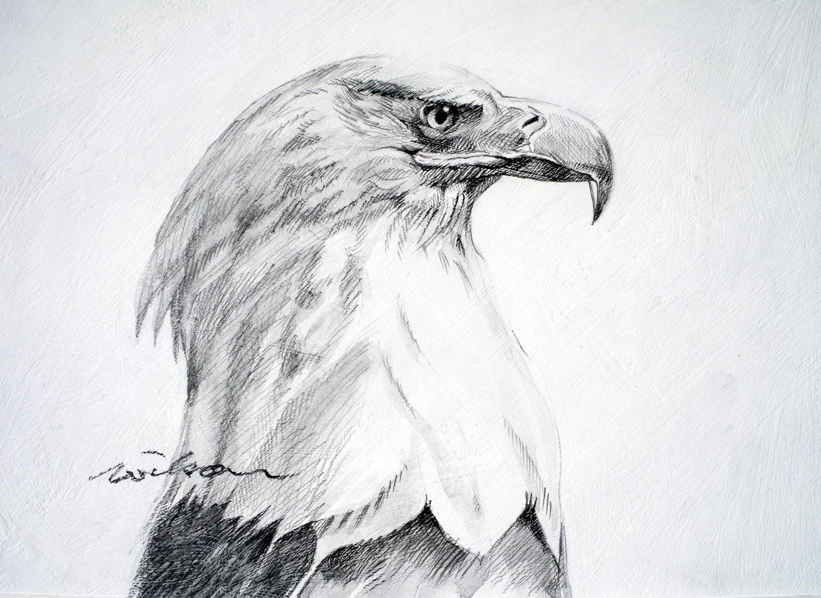 Картинки орлов рисунки