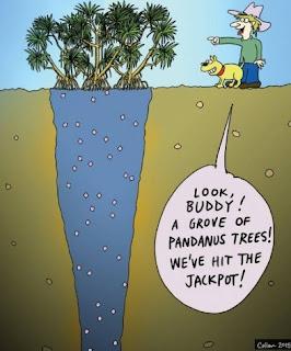 tanaman pandan yang bisa deteksi berlian tersembunyi di bawah tanah. cek di halaman rumahmu ada nggak!!