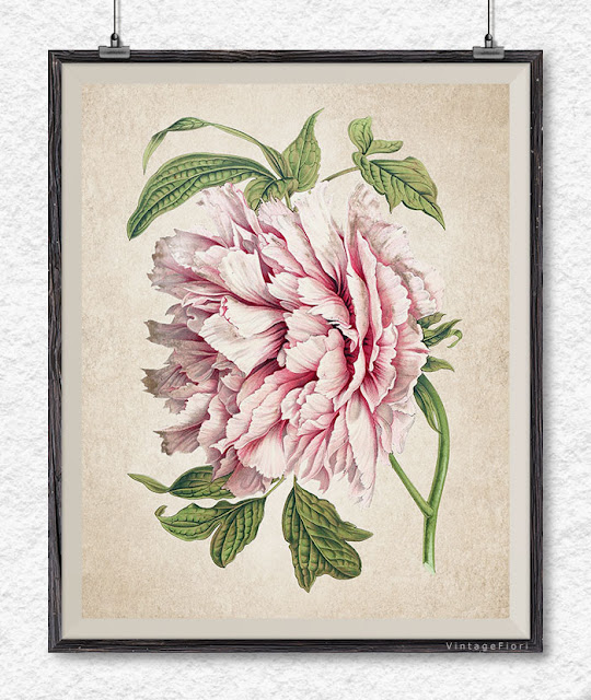 Peony print, peony clipart, vintage flower art, printable wall art, Etsy