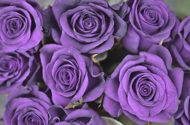 purple rose flower meaning