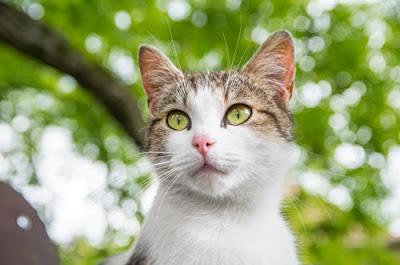 cat in trees