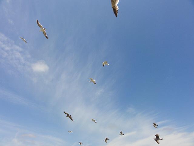 Hovering gulls