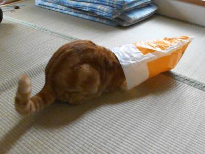ビニール袋に顔を突っ込む猫です。