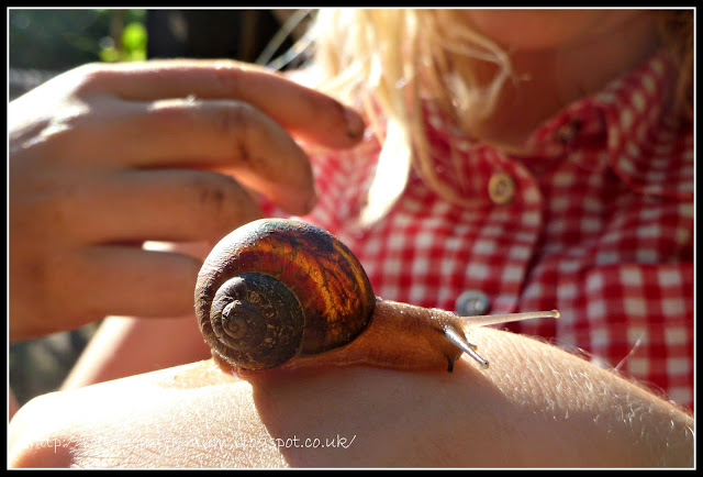 Garden Snail, snail racing winner, #50things, National Trust