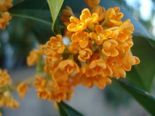 toko-bunga-surabaya-sukis-murah