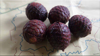 gambar buah jernang