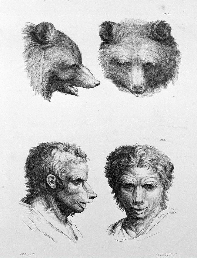 İnsanlar, Hayvanlara Evrimleşseydi Neye Benzerdi