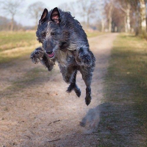 Cross Breed Dogs Scotland