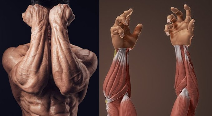 How To Build Monster Forearms - Bodybuilding - Fitness