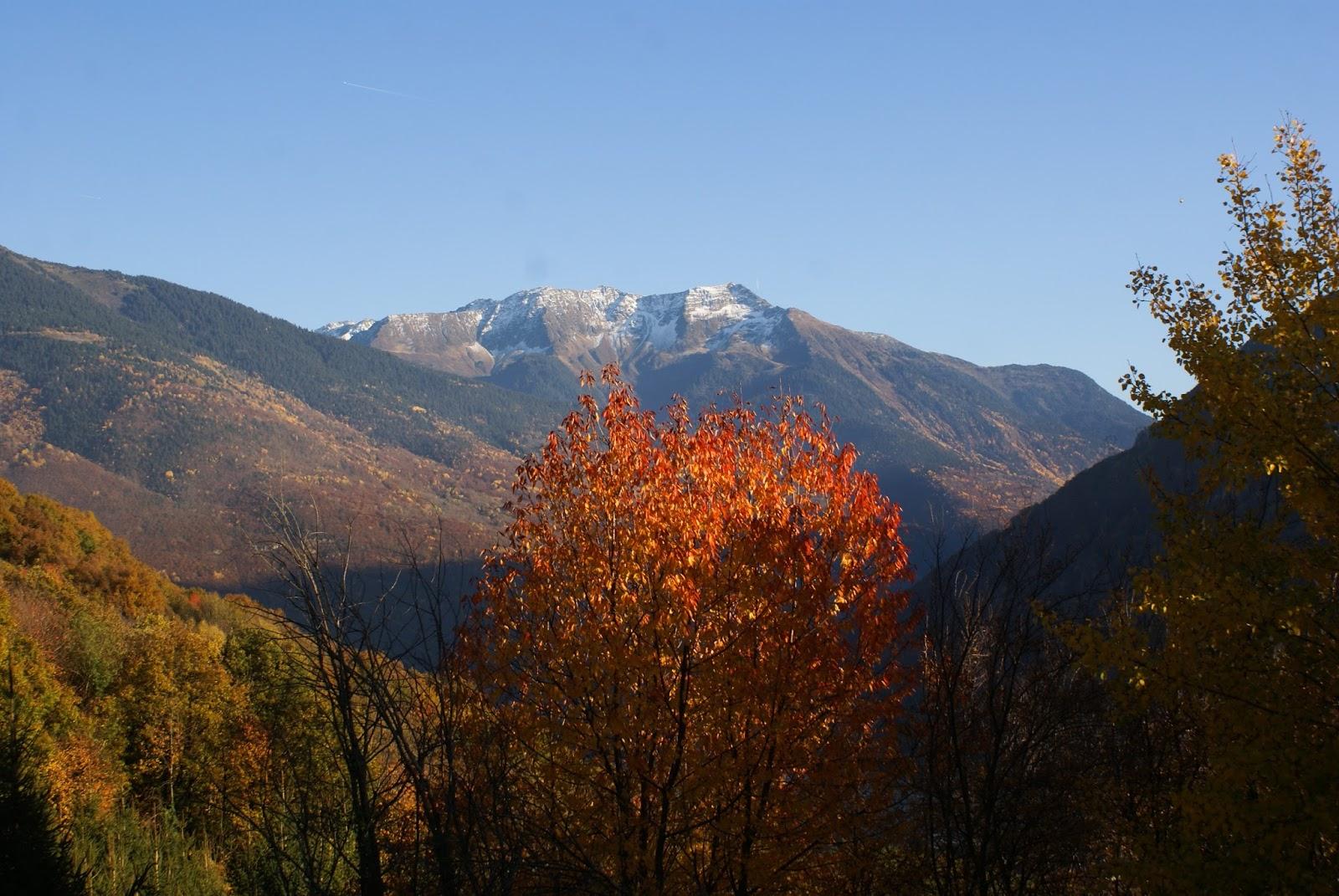 automne savoie feuilles nature vue montagne