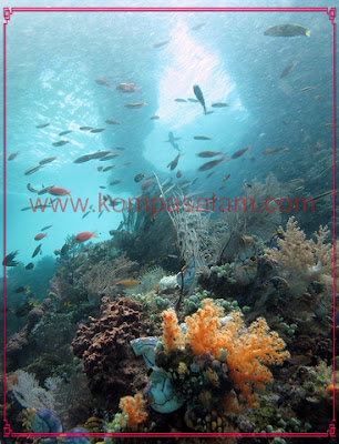 Dive at Raja Ampat.