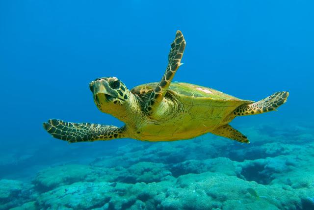 Ανακοίνωση του Δήμου Λουτρακίου - Περαχώρας - Αγ. Θεοδώρων για τις θαλάσσιες χελώνες