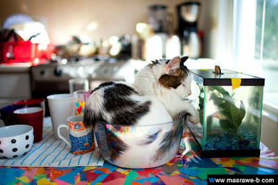 صور صور قطط كيوت 2020 خلفيات قطط جميلة جدا cats20.png