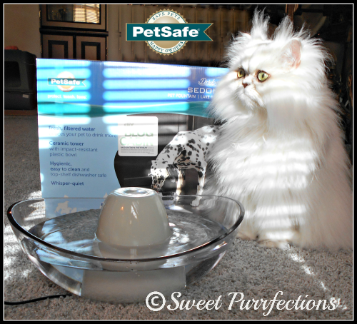 Brulee and the Drinkwell® Sedona Fountain at PetSafe®