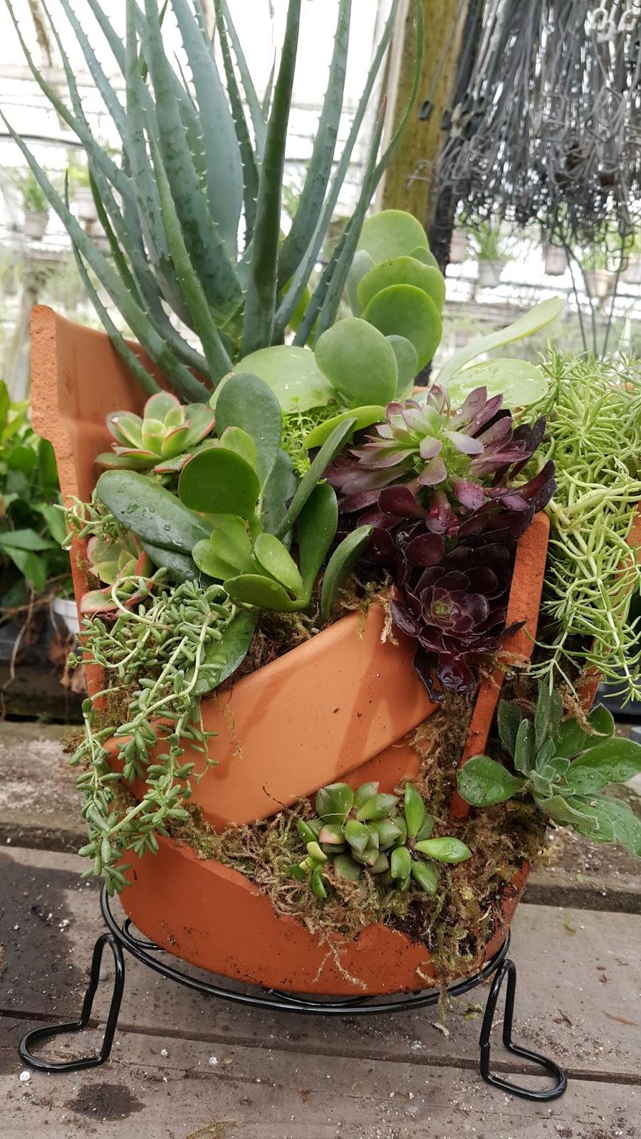 May day nursery news broken pot gardens broken pot gardens workwithnaturefo