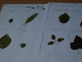 Resultat d'imatges de herbari cicle inicial