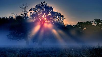 Árbol en un parque de noche con sol saliendo