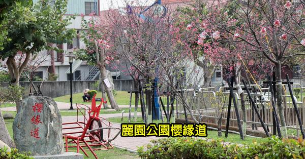 台中太平|2019麗園公園|300公尺櫻緣道賞櫻花|太平賞櫻好去處