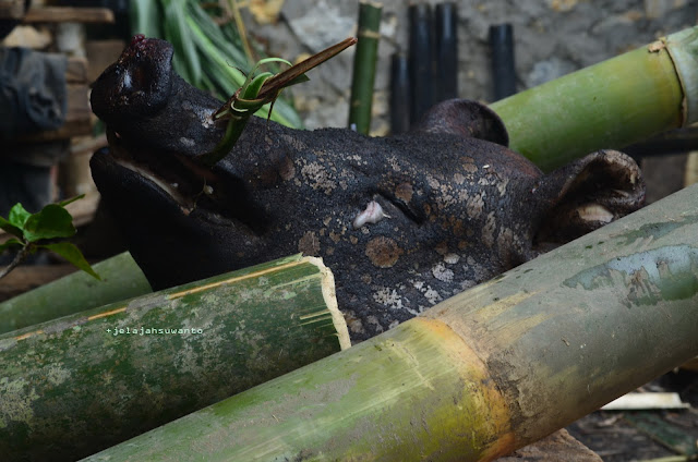 Kepala babi di upacara Rambu Solok Tana Toraja || JelajahSuwanto
