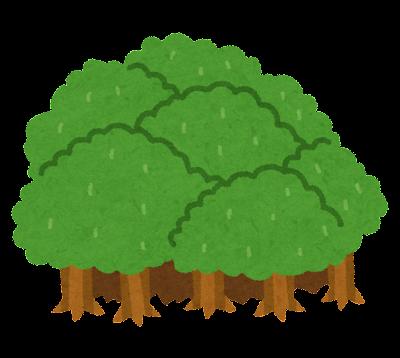 森のイラスト
