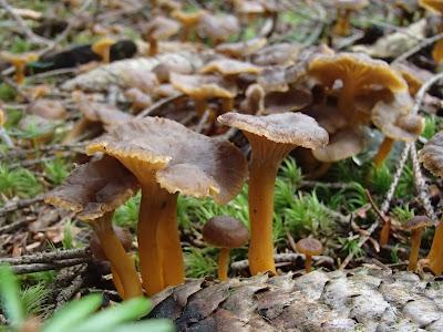 grzyby w lipcu, samotne grzybobranie, grzyby o świcie, grzyby na Orawie