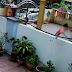 Jiran busuk hati kantoi buang tahi anjing ke rumah sebelah (video)