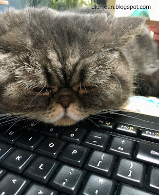 Popoki the cat resting her head on my keyboard