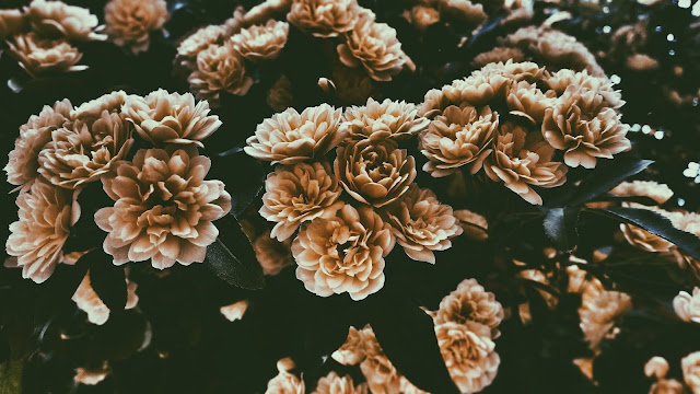Desaturated flowers