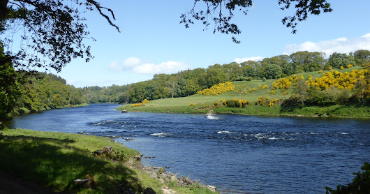 Salmon Fishing Scotland Prospects for Tay, Perthshire w/c 24th April 2017.