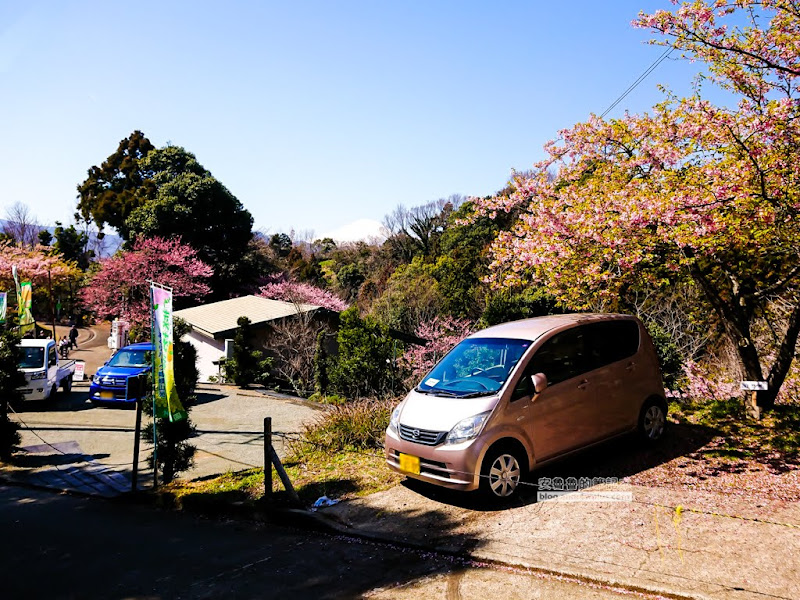 matsuda-sakura-38.jpg