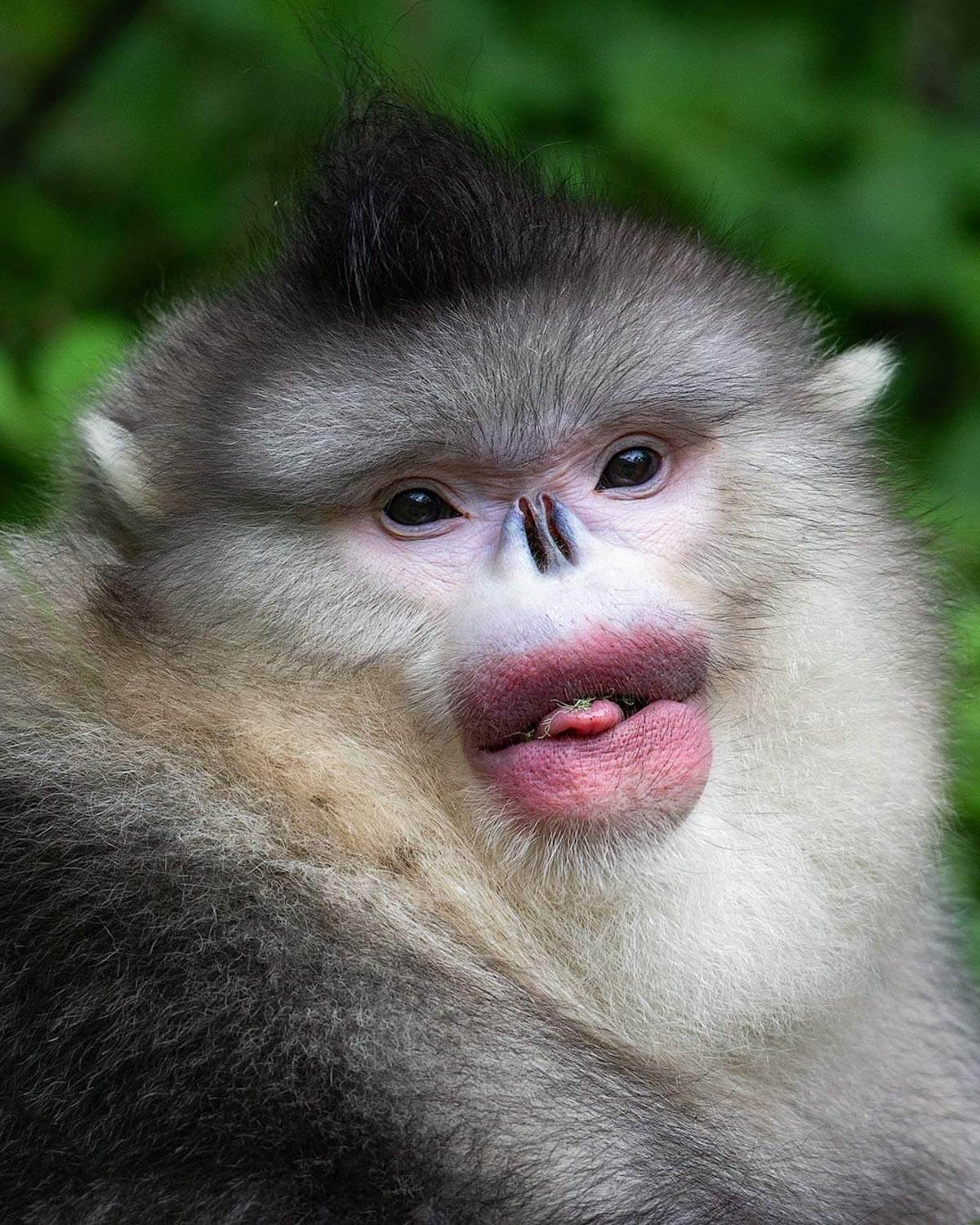 Human-Like Micro-Expressions Of Endangered Animals Across The World (Interview)