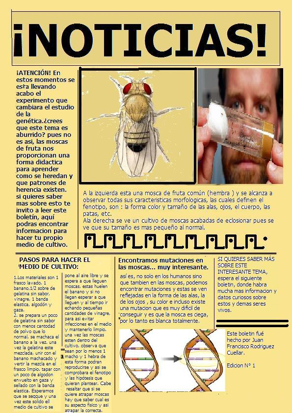 669b807a85 Genetica en Guppys y Moscas de Fruta: ¡¡Boletin Científico!!