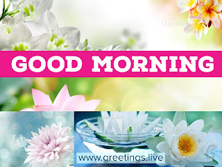 Good morning multiple flowers multi colour shades HD