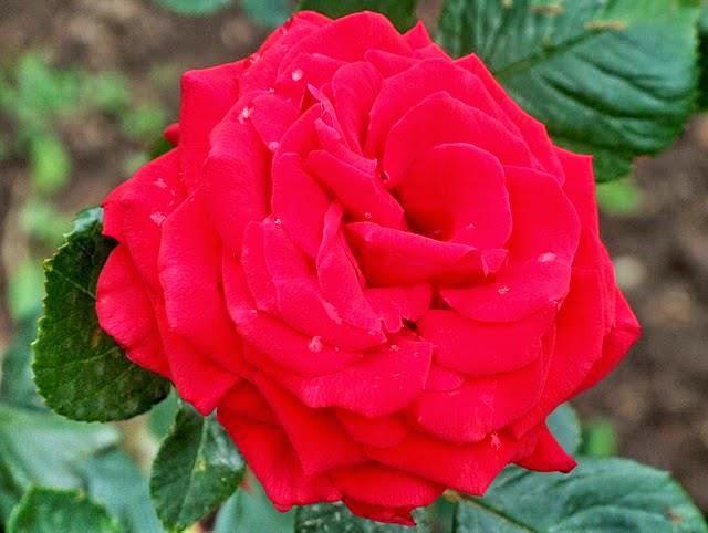 خلفيات وصور للطبيعه وازهار واشجار عاليه الجوده