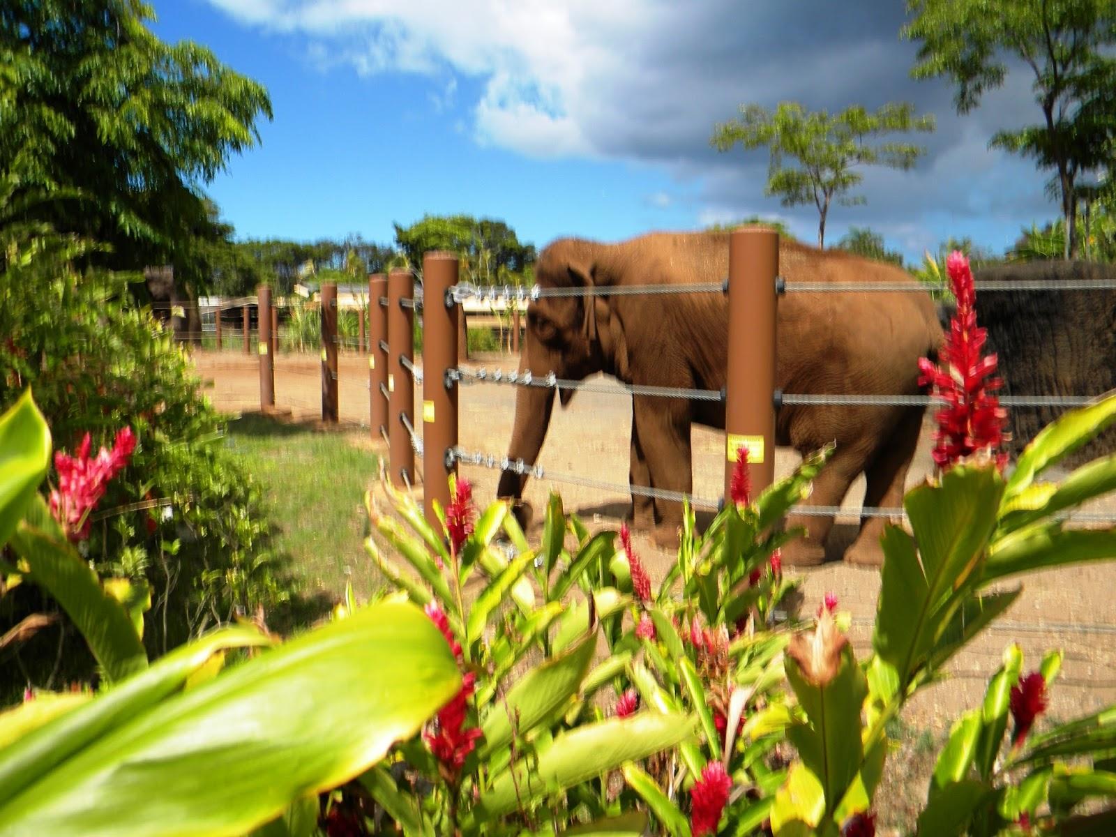 All Hawaii News: Honolulu Zoo struggling; schools
