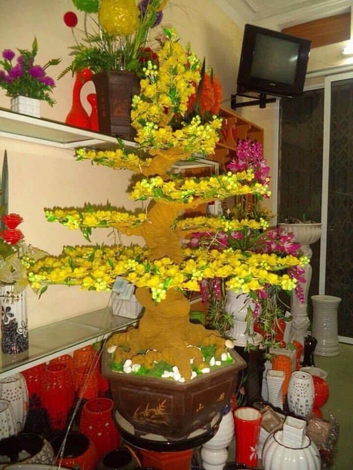 Goc bonsai mai dao tai Son Tay