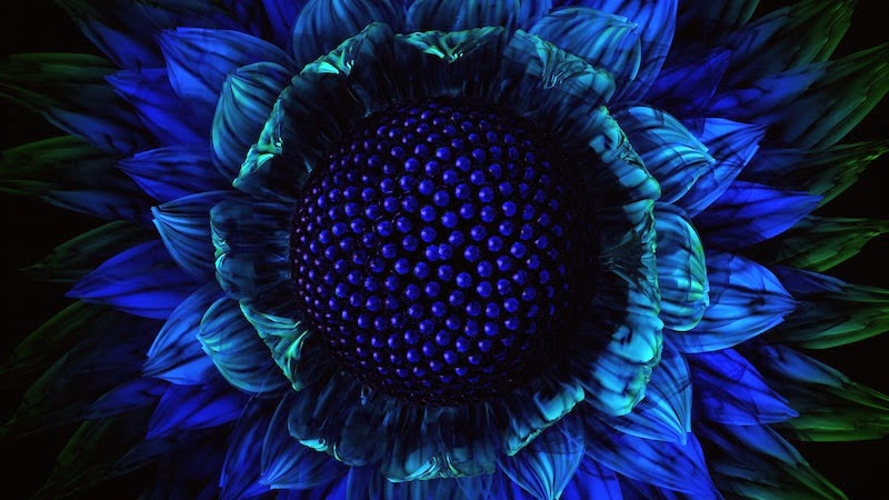 Deep Blue Flower Wallpaper