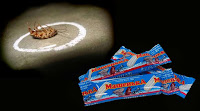 Чего боятся тараканы? Рекомендации и советы http://prazdnichnymir.ru/