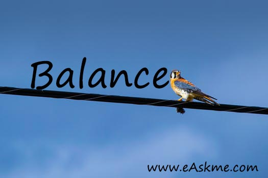 Balance Everything: Top 9 Best SEO Habits & How to Develop Them: eAskme