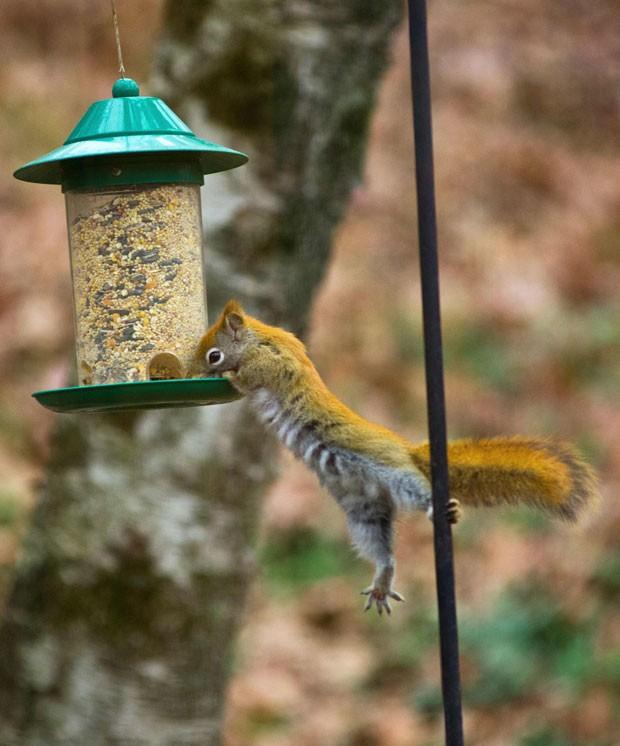 Comedouro/bebedouro para pássaros