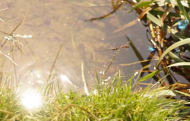 Best UK photography blog Norfolk countryside Vuelio media