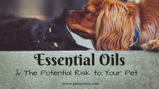 essential oils pets