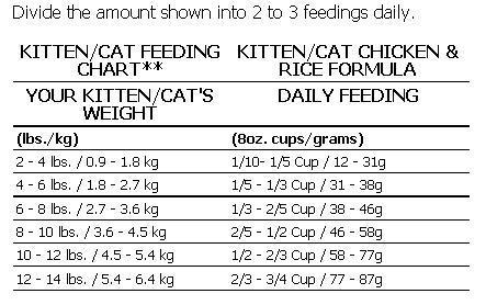 Tag: kitten