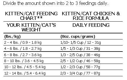 Daftar Harga Kucing Munchkin Terbaru Mei 2019